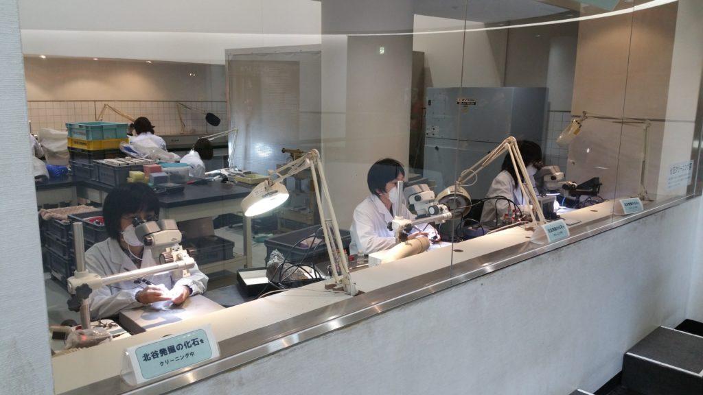 福井県立恐竜博物館化石クリーニング
